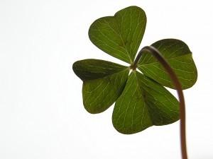 Luck_clover-300x225